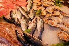 Ryby, mořské plody